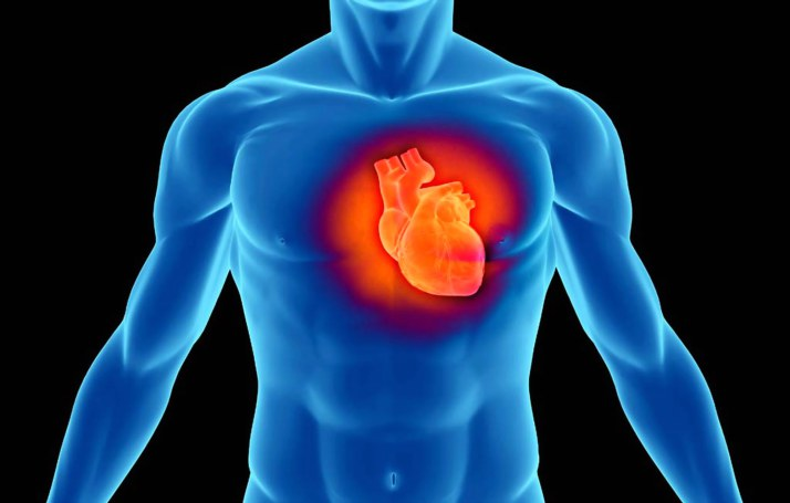 Italia, in arrivo una terapia genica per riparare il cuore dopo l'infarto